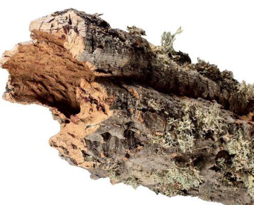10 motivi per isolare casa con pannelli di sughero biondo naturale