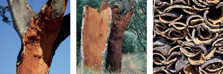 sughero-pianta-albero-corteccia-3